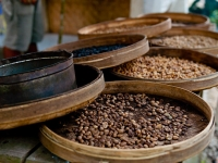 Kopi Luwak - самый дорогой кофе в мире!